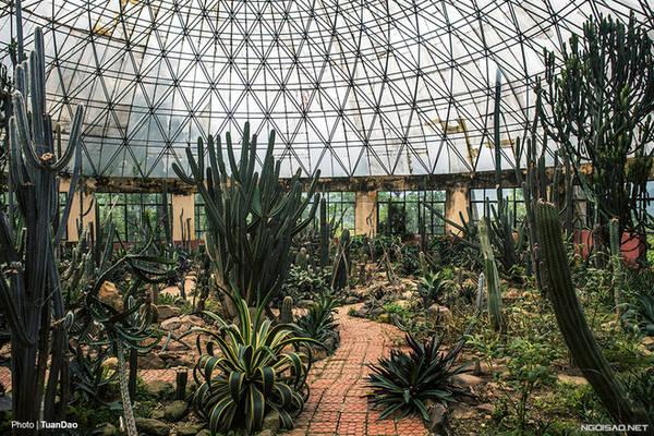Có tới 1.200 giống xương rồng từ khắp nơi trên thế giới được trồng ở nhà kính này.