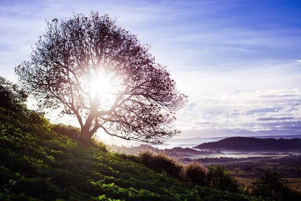 Đến với đồi chè, dường như những buổi trưa nắng hạ chỉ được điểm qua một vài dải nắng vàng rực, bởi nơi đây đã được màu xanh của lá chè chiếm trọn. Ảnh: Đoàn Minh Tuấn