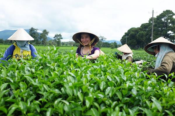 Cảnh lao động trên vườn trà cũng làm mê hoặc lòng người. Ảnh: H.N