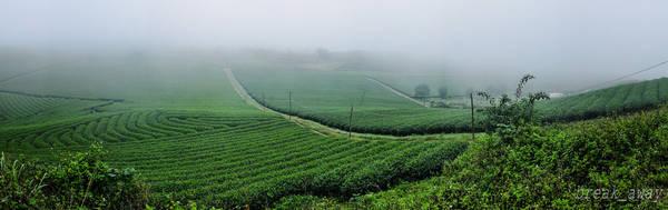 Những đồi chè trải dài tít tắp nối liền với nhau như những cánh đồng xanh bất tận. Ảnh: Vũ Quang