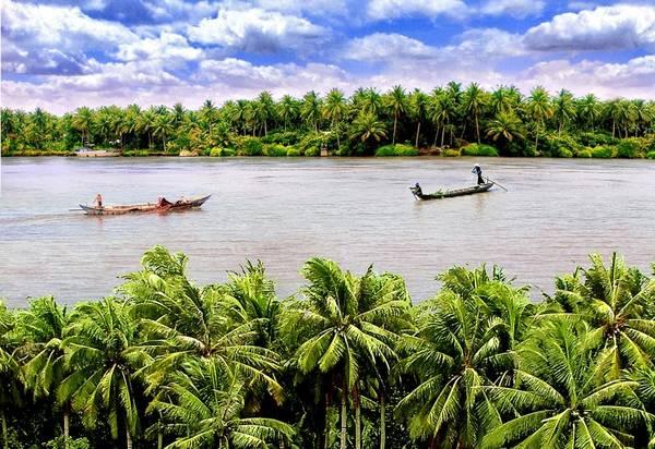Dừa Bến Tre. Ảnh: baoduyentourist