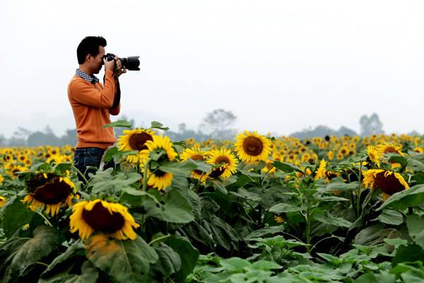 Cây hoa khá cao nên nhiều bạn trẻ đến chụp ảnh đều phải dùng thang. Ảnh: Tuấn Đào