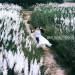 lang-man-mot-chieu-lau-nam-dan-ivivu-1