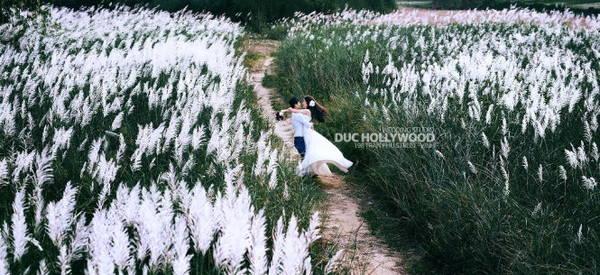 Vào mùa lau, cảnh sắc nơi này thật sự như thiên đường - Ảnh: Đức Hollywood
