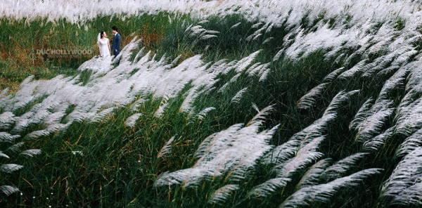 Chụp ảnh cưới bên bờ cỏ lau - Ảnh: Đức Hollywood
