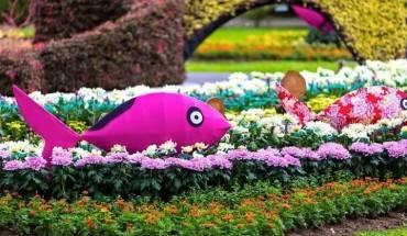 Tới lễ hội, du khách sẽ vô cùng mãn nhãn với vẻ đẹp của hơn 80 ngàn chậu hoa cúc với đủ chủng loại cũng nhau khoe sắc.