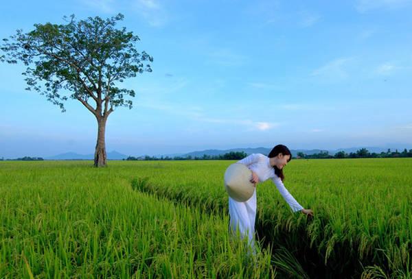 Phong cảnh miền quê yên bình và dung dị ở Phú Yên. Ảnh: Lê Minh.