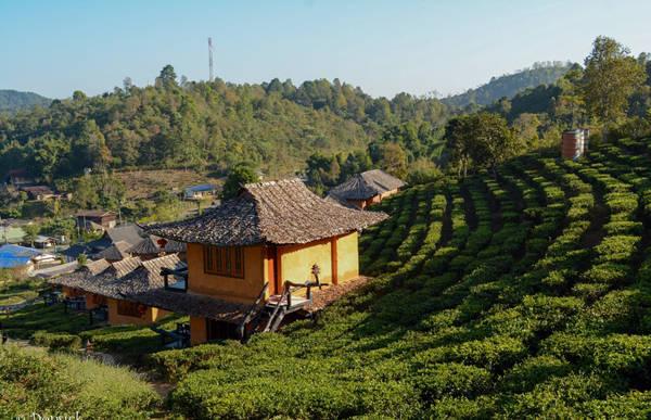 Những ngôi nhà nhỏ nhắn, xinh đẹp nằm ngay trên những đồi chè là nơi sinh sống của các gia đình người Hoa lưu vong từ nhiều thế hệ nay ở Ban Rak Thai.
