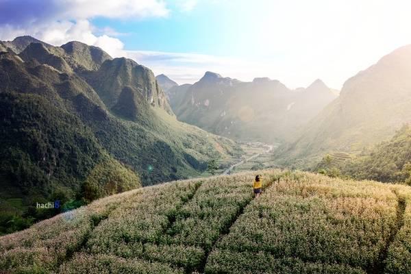 Các vườn hoa tam giác mạch thu phí khách vào tham quan, chụp ảnh với giá 10.000 - 20.000 đồng một người. Từ Hà Nội, bạn nên dành khoảng 3 ngày để di chuyển, ngắm cảnh và trải nghiệm các nét văn hóa của cao nguyên đá. Ảnh: Hachi8