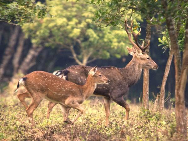Nhiều thú hoang dã quý hiếm trong Vườn Quốc gia. Ảnh: ST