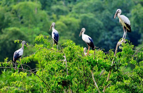 Tới đây du khách sẽ được khám phá cuộc sống hoang dã của gần 40 loài chim. Ảnh: ST