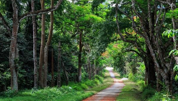 Con đường tuyệt đẹp bên trong Vườn quốc gia Cúc Phương. Ảnh: ST