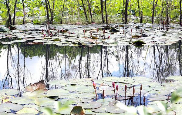 Nước suối Yến trong vắt in hình cây cối - Ảnh: Bá Quỳnh