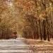 Rừng cao su thay lá tuyệt đẹp ở Gia Lai. Ảnh: phuot.vn