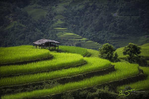 Cánh đồng lúa huyền thoại ở tỉnh Hà Giang.