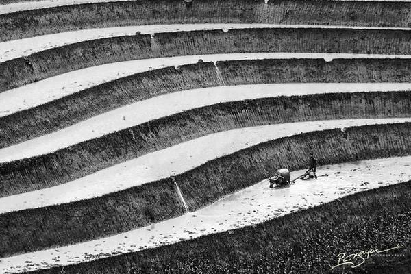 Người nông dân đang cày bừa trên thửa ruộng.