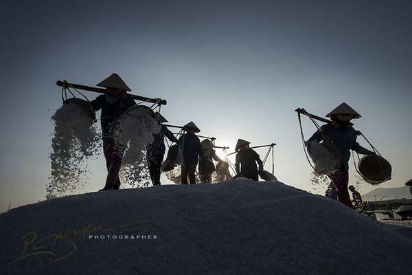 Thu hoạch muối ở Khánh Hòa.