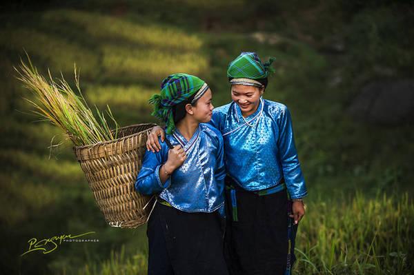 Những người phụ nữ Dao vào mùa gặt.