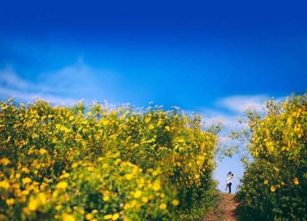 Dã quỳ vàng rực khắp các ngọn đồi Tây nguyên - Ảnh: Huyền Thương/Boredpanda