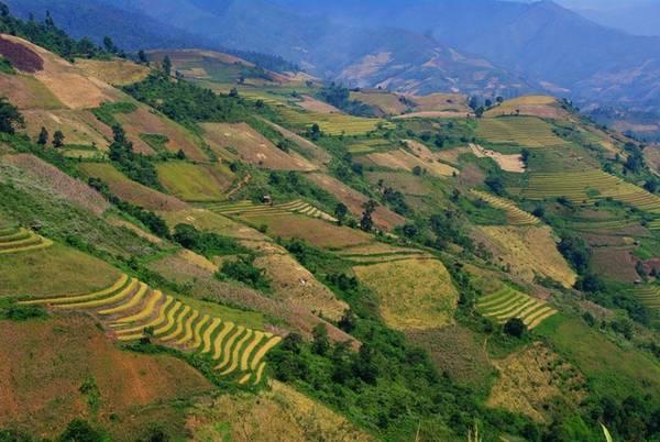 Ở những góc khác trong thung lũng, bạn có thể nhận thấy vẫn còn rất nhiều ruộng bậc thang mà lúa trên nương vẫn đang xanh rì...