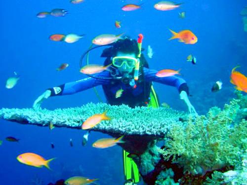 Lặn ngắm san hô Nếu muốn khám phá lòng đại dương, bạn có thể trải nghiệm lặn ngắm san hô. Có rất nhiều đảo cho du khách lựa chọn để trải nghiệm hoạt động này, một số trong đó gồm Hòn Thơm, Hòn Dầu... ở An Thới hay Hòn Móng Tay, Hòn Đồi Mồi ở Bắc đảo. Tour lặn ngắm san hô kết hợp câu cá ở đây có giá từ 250.000 đồng một người. Ảnh: phuquocredrive