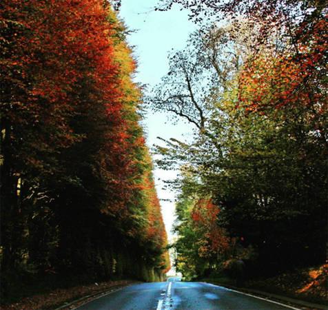 Theo sách kỷ lục Guinness, hàng cây sồi Meikleour là hàng rào cao nhất thế giới. Nó được trồng năm 1745 ở khu vực Perth và Kinross.