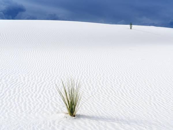New Mexico: Bang New Mexico sở hữu những đụn cát thạch cao lớn nhất thế giới. Bạn sẽ được chiêm ngưỡng một vùng cát trắng như tuyết trải rộng hơn 700 km2 dưới bầu trời xanh biếc.