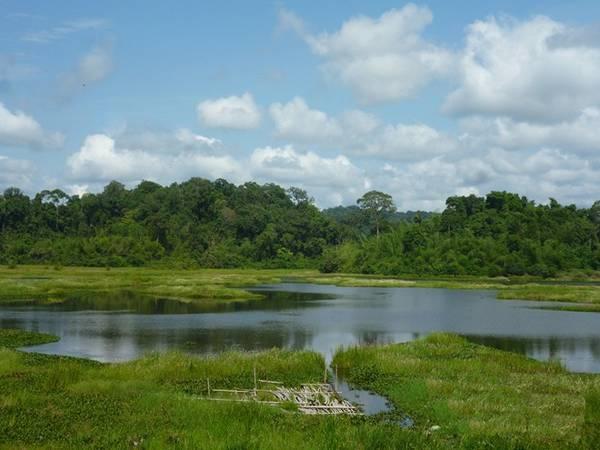 Đến Nam Cát Tiên, bạn nhớ ghé Bàu Sấu ngắm đàn cá sấu bơi lội đớp mồi. Ảnh: Phước Bình.