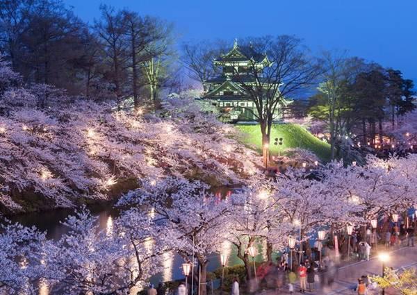 Mùa hoa chỉ kéo dài khoảng 2 tuần, sau đó những cánh hoa rụng xuống phủ kín mặt đất như một lớp tuyết hồng. Những điểm tổ chức tiệc ngắm hoa anh đào nổi tiếng ở Nhật là công viên Hirosaki, di tích lâu đài Takato và Yoshinoyama. Ảnh: Japanculturereview.