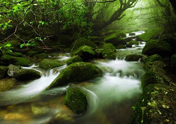 Yakushima Hòn đảo Yakushima thu hút không chỉ những người yêu thích leo núi mà tất cả du khách với các bãi biển đẹp, suối nước nóng tự nhiên và cảnh rừng hoang sơ. Yakushima có 6 đỉnh núi cao trên 1.800 m, trong đó đỉnh Miyanoura-dake cao 1.935 m là thử thách cho bất cứ nhà leo núi chuyên nghiệp nào. Trước khi chinh phục núi ở đây, bạn phải điền vào mẫu đơn về cung đường sẽ đi để đảm bảo an toàn nếu có vấn đề xảy ra. Ảnh: 37framesphotographyblog