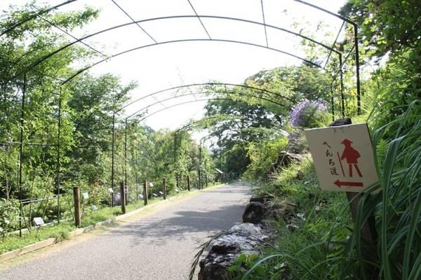 Shikoku Henro Đây là hòn đảo nhỏ nhất trong số các đảo chính tại Nhật Bản và cũng là địa điểm ưa thích của những người sùng đạo nước này. Nếu muốn hoàn thành trọn vẹn tuyến đường, bạn sẽ phải đi hơn 1.000 km và qua 88 ngôi đền. Thông thường, những người hành hương mất khoảng 1-2 tháng để hoàn thành cung đường. Muốn tiết kiệm thời gian, có những người đã bỏ qua một số ngôi đền và sử dụng phương tiện công cộng. Ảnh: shikoku88temples