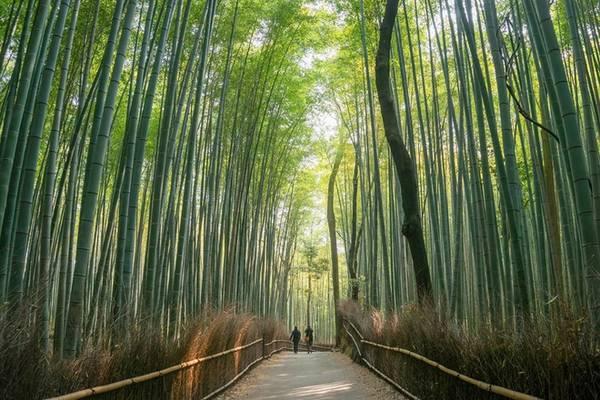 Nakasendo Con đường Nakasendo nổi tiếng với nhiều di sản văn hóa và thiên nhiên, chạy qua các vùng như Kyoto, Shiga, Gifu và Nagano. Đây là tuyến đường mà nhiều vị tướng Nhật Bản đã di chuyển trong những chiến dịch quân sự, với tổng chiều dài hơn 533 km, chia thành 67 chặng nhỏ. Bạn có thể sử dụng phương tiện công cộng để giảm thời gian đi lại hoặc đi bộ rồi dừng chân tại những thị trấn cổ để cảm nhận được không khí và nét đẹp xưa cũ của Nhật Bản. Ảnh: macsadventure