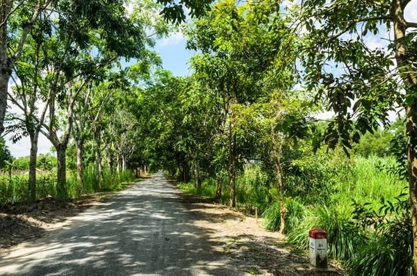 Rừng quốc gia cách thành phố Rạch Giá, tỉnh Kiên Giang hơn 60 km về phía nam. Đường vào rừng rợp bóng cây mát mẻ, mang đặc trưng của miền Tây.