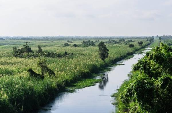 Vùng biên giữa khu vực dân cư và rừng chỉ cách nhau một con kênh rộng. Đây là đoạn đường đi đến tháp canh của kiểm lâm.