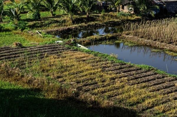 Dân cư làm nông nghiệp ngay bìa rừng.