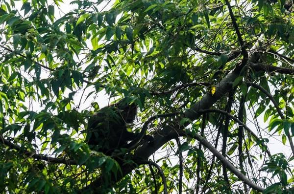 Nếu may mắn, bạn có thể gặp bầy khỉ thoăn thoắt chuyền cành giữa chốn rừng xanh.