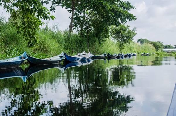 Đây là khu rừng đặc biệt, rừng ngập nước nên du khách tham quan bằng thuyền chứ không phải đi trên đất như những khu rừng khác. Trong hình là những chiếc xuồng được cột dọc 2 bên bờ.