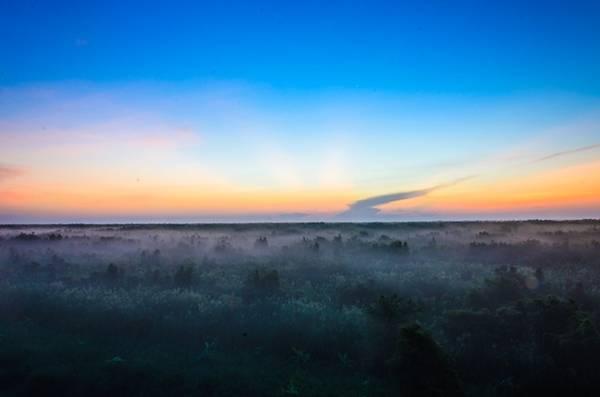 Tại tháp Cây Gòn, toàn cảnh rừng hiện ra như trong mơ. Những lớp sương mù lơ lửng giữa rặng cây khiến du khách xuýt xoa, vì sương mù hiếm có giữa miền Nam.