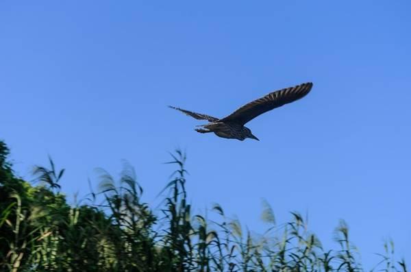 Những chú chim tự do tung cánh trên vùng trời. Tiếng đập cánh, tiếng kêu gọi nhau nhộn nhịp mang lại nhịp sống tràn đầy sinh khí của tự nhiên.
