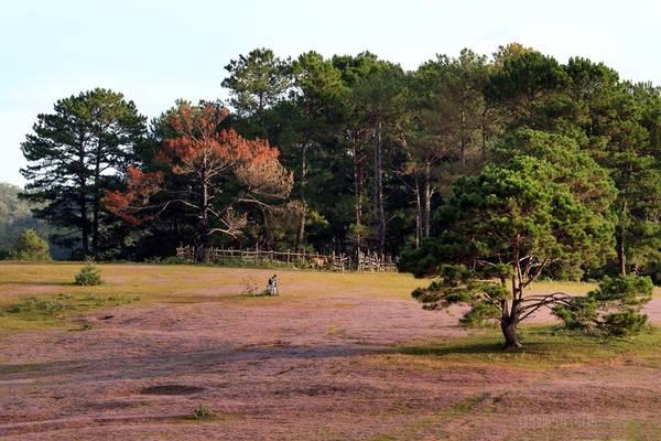 Cỏ hồng mọc bên cạnh những cây lá phong tạo nên màu sắc hòa trộn rực rỡ.