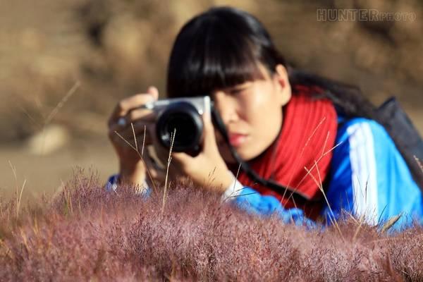 Những đồi cỏ hồng thường được mọc ở Bắc Mỹ và Thượng Hải (Trung Quốc), nên loài hoa ấy xuất hiện ở Đà Lạt đã trở thành điểm cuốn hút các nhiếp ảnh gia.