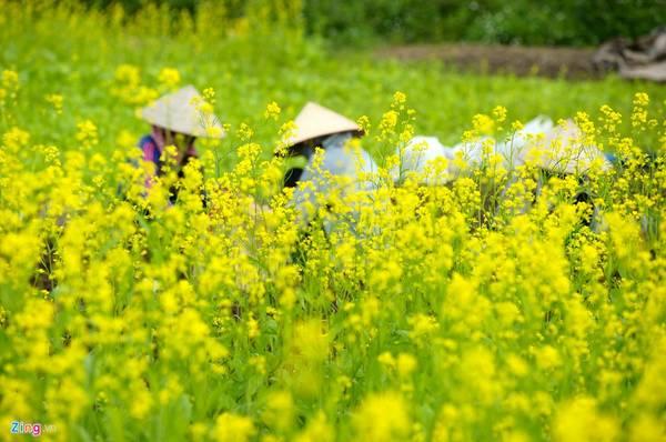 Kết quả hình ảnh cho Phát triển du lịch hoa ở Hà Nội