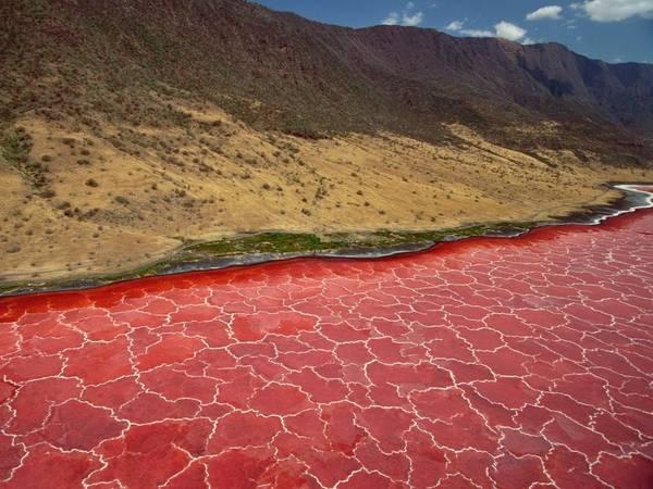 Hồ Natron, Monduli, Tanzania: Hồ muối đặc biệt này có nhiệt độ 120 độ C, và độ PH thấp ở mức nguy hiểm. Chính sự xuất hiện của vô số các loài tảo đỏ đã hấp dẫn hàng triệu con hồng hạc đến đây sinh sản.