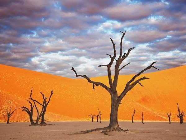 Công viên Namib Naukluft, Namibia: Những trảng cát đỏ rực và cây khô khẳng khiu khiến Namibia có cảnh tượng như trên sao Hỏa.