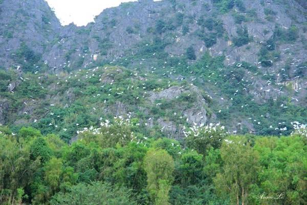 Thăm Vân Long vào lúc hoàng hôn, bạn có rất nhiều cơ may gặp các cá thể voọc chuyền tay trên những cành cây hay đu mình trên những mỏm núi đá vôi. Nhưng điều đặc biệt nhất có lẽ chính là cảnh tượng hàng nghìn con cò trắng bay về tìm nơi trú đêm, xao xác cả một vùng trời.