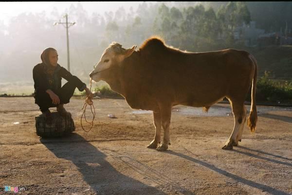 Người bán bò tại chợ kinh doanh gia súc gia cầm.