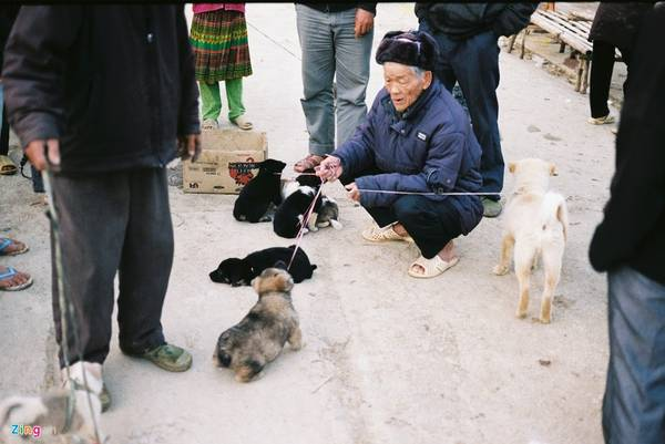 Những chú chó con cũng được người dân mang tới đây bán, trao đổi.