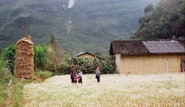 Nang-dat-vang-Ha-Giang-nhung-ngay-dau-dong-ivivu-3