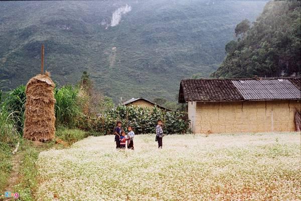 Những đứa trẻ chơi thơ thẩn trên cánh đồng hoa tam giác mạch tại xã Phố Cáo.