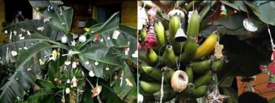 6. Ấn Độ: Ấn Độ chỉ có một phần nhỏ dân số theo đạo Kito và họ đón Giáng sinh theo cách riêng. Thay vì trang trí cây thông Noel rực rỡ như nhiều nước khác trên thế giới thì ở đây, họ lại trang trí trên cây chuối.
